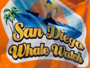 San Diego Whale Watch Tour