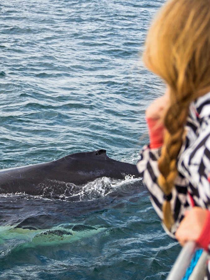 Brier Island Whale and Seabird Cruises
