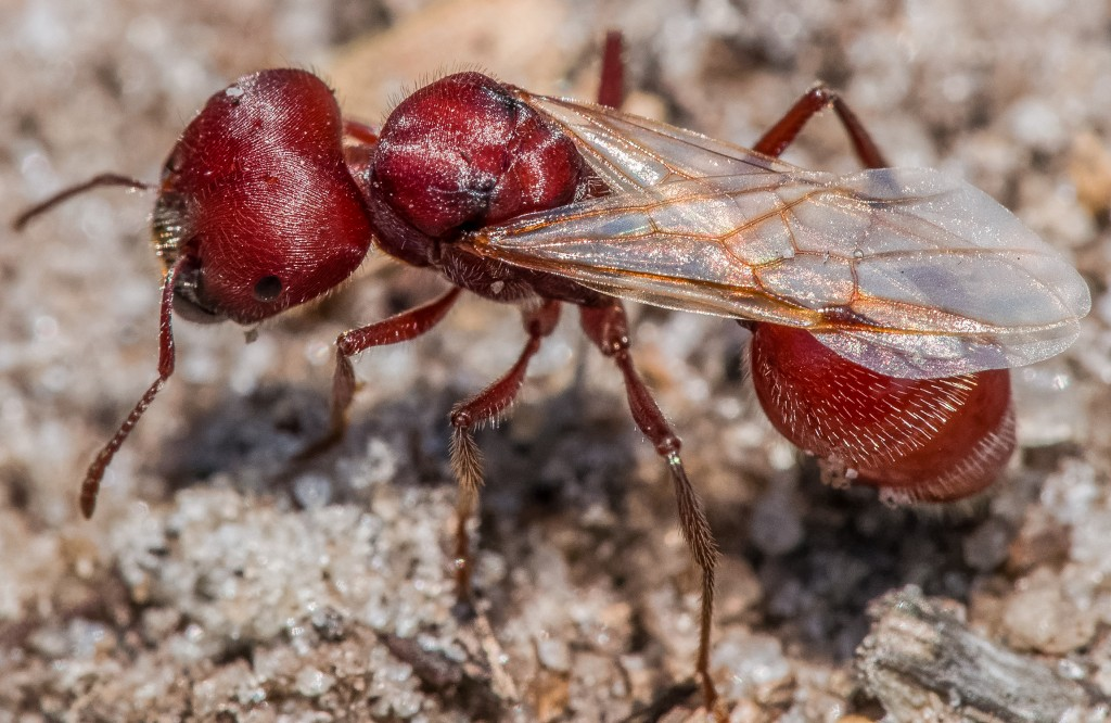 Walk slowly, look closely and you'll see small creatures like this ant.
