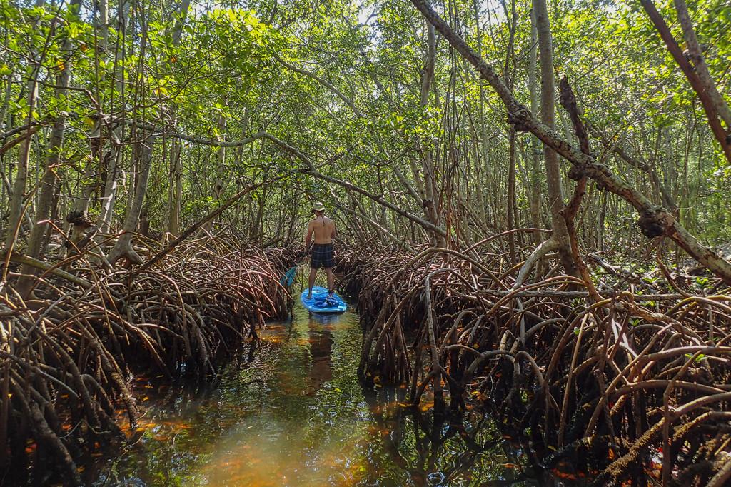 Lido Key Mangroves SUP